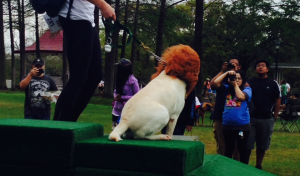 Houston-Humane-Society-Fun-Run-Mufasa